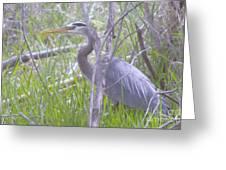 Heron In The Shade  Greeting Card