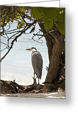 Heron Greeting Card by Jane Rix
