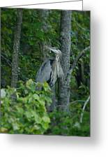 Heron On A Limb Greeting Card
