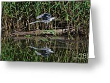 Heron Reflected In The Water Greeting Card