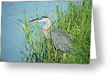 Heron Rockefeller Wma La Greeting Card