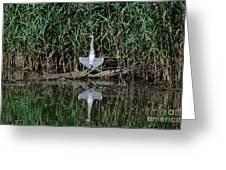 Heron Sunbath Greeting Card