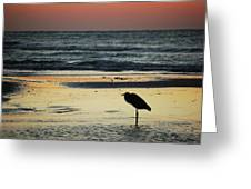Heron Waiting For The Sunrise Greeting Card