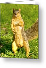 Hey Buddy Have You Seen My Nuts Greeting Card by James Marvin Phelps