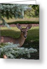 Hi Deer Greeting Card