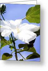 Hibiscus -1 Greeting Card