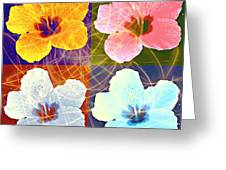 Hibiscus Blooming Greeting Card