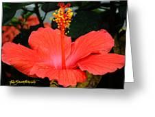 Hibiscus Bowl Greeting Card