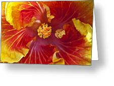 Hibiscus Center Greeting Card