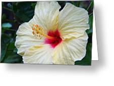 Hibiscus Faded Beauty Greeting Card