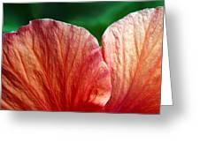 Hibiscus Fandango Greeting Card