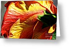 Hibiscus Fashion Greeting Card