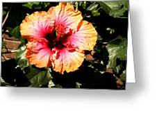 Hibiscus Flower Greeting Card by Lisa Phillips