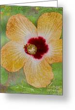 Hibiscus Gold And Red Greeting Card
