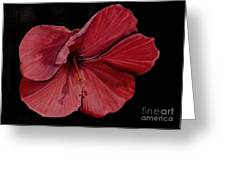 Hibiscus Happiness Greeting Card
