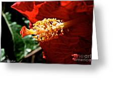 Hibiscus Highlight Greeting Card
