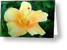 Hibiscus Hip Greeting Card