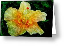 Hibiscus Hiwc Greeting Card
