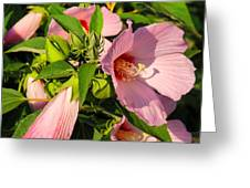 Hibiscus In Summer Greeting Card