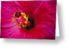 Hibiscus Macro Greeting Card by Joe Carini - Printscapes