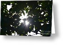 Hickory Triple Stars Greeting Card