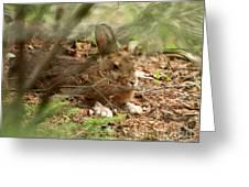 Hidden Hare Greeting Card