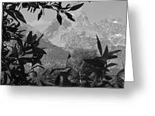 Hidden View Bw Greeting Card