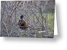 Hiding Pheasant Greeting Card