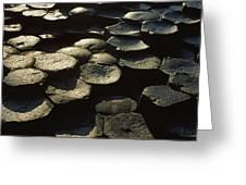 High Angle View Of Basalt Rocks, Giants Greeting Card