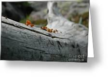 High Country Mushrooms Greeting Card