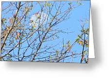 High Point Moon Greeting Card