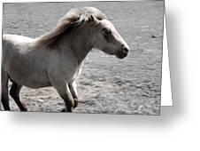 High Spirited Pony Greeting Card