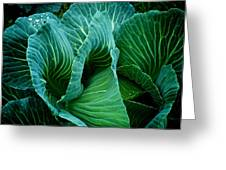 High Summer Cabbage Greeting Card