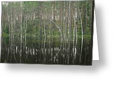 High Waters In A Forest Of Evergreens Greeting Card