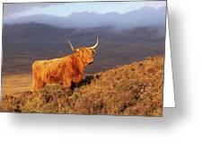 Highland Cattle Landscape Greeting Card