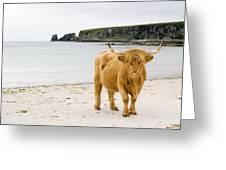 Highland Cow On A Beach Greeting Card