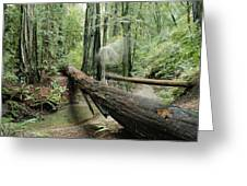 Hiker Moving Over A Fallen Redwood Tree Greeting Card