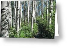 Hiking Through Aspens At Beaver Creek Greeting Card