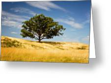 Hill Top Beauty Greeting Card