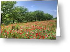 Hill Where A Poppy Bloom Greeting Card