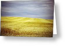 Hills Of Gold Greeting Card