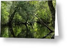 Hillsborough River Reflections Greeting Card