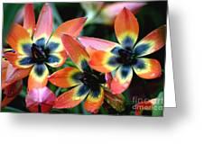 Hippie Tulips Greeting Card