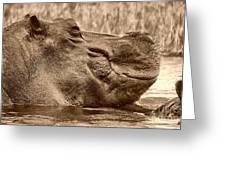 Hippo Bull Greeting Card