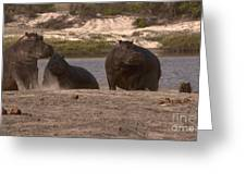 Hippos And Baboons Greeting Card