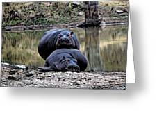Hippos In Love Greeting Card