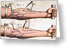 Historical Illustration Of Blood Vessels Greeting Card