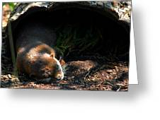 Hit The Otter Snooze Greeting Card