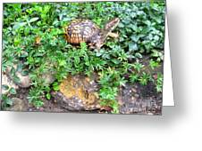 Hitchin A Ride On A Turtle  Greeting Card