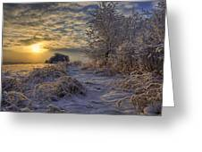 Hoar Frost Covered Trees At Sunrise Greeting Card